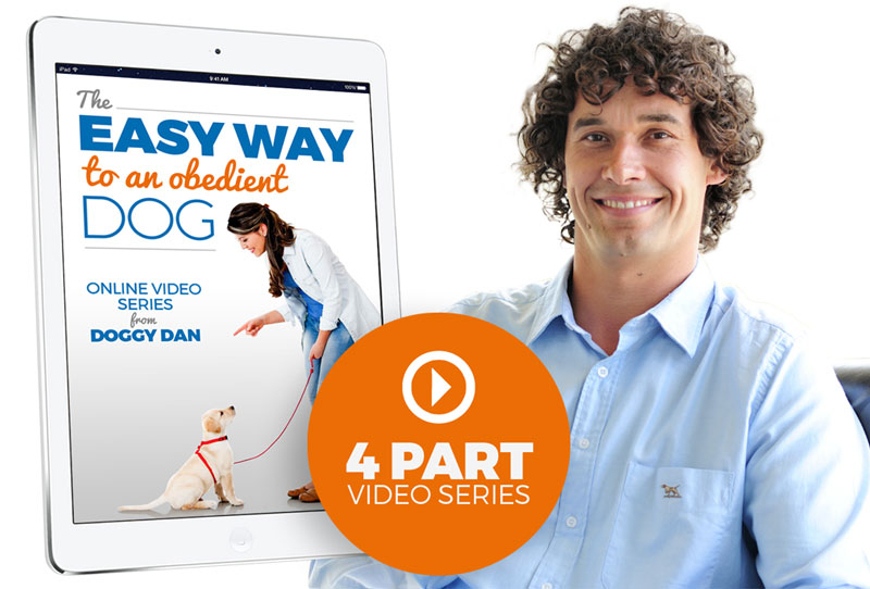 Doggy Dan Free Dog Training Videos