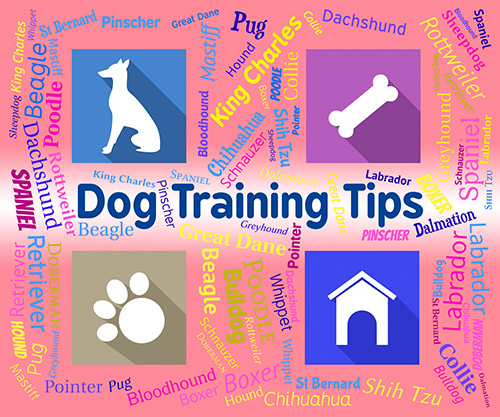 Top Dog Training Tips